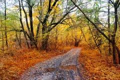 Δρόμος στο δάσος φθινοπώρου Στοκ Φωτογραφίες