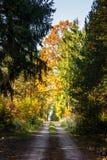 Δρόμος στο δάσος φθινοπώρου Στοκ εικόνα με δικαίωμα ελεύθερης χρήσης