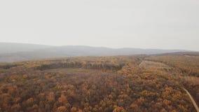 Δρόμος στο δάσος φθινοπώρου απόθεμα βίντεο