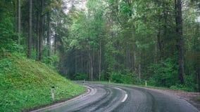 Δρόμος στο δάσος Στοκ Εικόνα