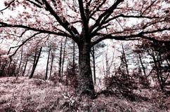 Δρόμος στο δάσος IV στοκ φωτογραφίες με δικαίωμα ελεύθερης χρήσης