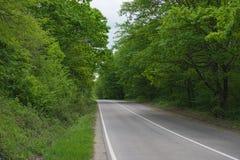 Δρόμος στο θερινό δάσος στοκ εικόνα με δικαίωμα ελεύθερης χρήσης