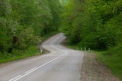 Δρόμος στο θερινό δάσος Στοκ Εικόνες