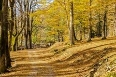 Δρόμος στο κίτρινο δάσος Στοκ φωτογραφία με δικαίωμα ελεύθερης χρήσης