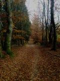 Δρόμος στο μέσο δάσος στοκ εικόνα με δικαίωμα ελεύθερης χρήσης