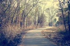 Δρόμος στο ξηρό δάσος Στοκ φωτογραφία με δικαίωμα ελεύθερης χρήσης