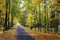 Δρόμος στο πάρκο φθινοπώρου Στοκ Εικόνες