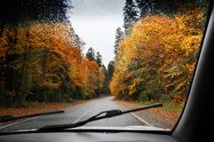 Δρόμος στο φθινοπωρινό βροχερό δάσος Στοκ φωτογραφίες με δικαίωμα ελεύθερης χρήσης