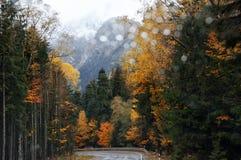 Δρόμος στο φθινοπωρινό βροχερό δάσος Στοκ φωτογραφία με δικαίωμα ελεύθερης χρήσης