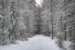 Δρόμος στο χειμερινό δάσος Στοκ φωτογραφία με δικαίωμα ελεύθερης χρήσης