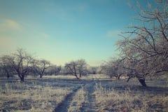 Δρόμος στο χειμερινό δασικό τοπίο μαλακός τονισμός στοκ φωτογραφία με δικαίωμα ελεύθερης χρήσης