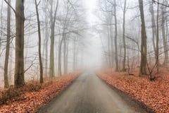 Δρόμος στο misty δάσος στην πτώση Στοκ Φωτογραφία