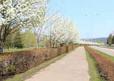 Δρόμος την άνοιξη με τα ανθίζοντας δέντρα μηλιάς Στοκ Εικόνες