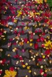 Δρόμος τούβλου πτώσης Στοκ Εικόνες