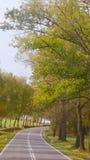 Δρόμος το φθινόπωρο Στοκ Εικόνες