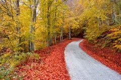 Δρόμος φθινοπώρου ασφάλτου στοκ φωτογραφίες