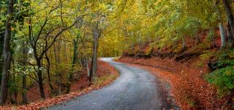Δρόμος φθινοπώρου ασφάλτου Στοκ φωτογραφία με δικαίωμα ελεύθερης χρήσης