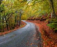 Δρόμος φθινοπώρου ασφάλτου Στοκ Εικόνες