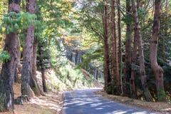 Δρόμος φθινοπώρου στο δάσος Στοκ εικόνα με δικαίωμα ελεύθερης χρήσης