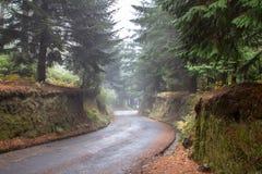 Δρόμος φθινοπώρου στο δάσος Στοκ φωτογραφίες με δικαίωμα ελεύθερης χρήσης