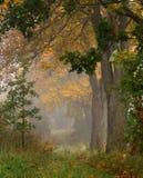 Δρόμος φθινοπώρου στοκ εικόνες με δικαίωμα ελεύθερης χρήσης