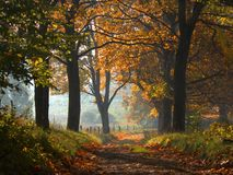 Δρόμος φθινοπώρου στοκ φωτογραφία με δικαίωμα ελεύθερης χρήσης