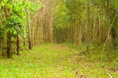 Δρόμος φυσικός. Στοκ φωτογραφία με δικαίωμα ελεύθερης χρήσης