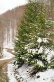 Δρόμος χειμερινών βουνών που καλύπτεται στο χιόνι Στοκ εικόνες με δικαίωμα ελεύθερης χρήσης