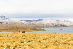 Δρόμος Cusco- Puno, λίμνη Titicaca, Περού, Νότια Αμερική. Ιερή κοιλάδα Incas. Θεαματική φύση των χιονωδών βουνών και του μπλε s Στοκ Εικόνες