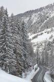 Δρόμος Mountaine και μεγάλα δέντρα Στοκ εικόνες με δικαίωμα ελεύθερης χρήσης