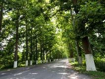 δρόμος poti της Γεωργίας Στοκ Φωτογραφία