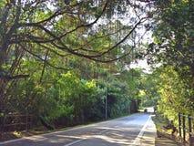 Δρόμος Punggol, Σινγκαπούρη στοκ εικόνα