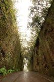 Δρόμος TF-134 στο αγροτικό πάρκο Anaga - σπάνιο αρχαίο δάσος δαφνών und Στοκ εικόνα με δικαίωμα ελεύθερης χρήσης