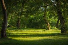 Δρύινα δέντρα στοκ εικόνες