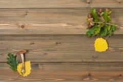 Δρύινα βελανίδια, φύλλα φθινοπώρου, άγριο μανιτάρι Ξύλινος Στοκ Φωτογραφίες
