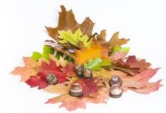 Δρύινα φύλλα και βελανίδια Στοκ Εικόνες