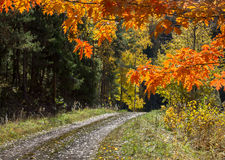 Δρύινα φύλλα Στοκ Εικόνες