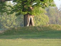 Δρύινη είσοδος δέντρων σε έναν άλλο κόσμο στοκ εικόνα με δικαίωμα ελεύθερης χρήσης