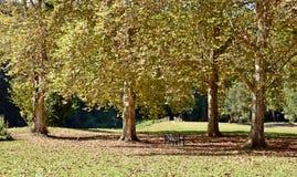 Δρύινη ρύθμιση δέντρων Στοκ εικόνες με δικαίωμα ελεύθερης χρήσης