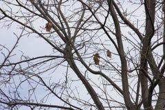 Δρύινοι κλάδοι με έναν μικρό αριθμό ξηρών φύλλων ενάντια στον ουρανό το φθινόπωρο στοκ εικόνα με δικαίωμα ελεύθερης χρήσης