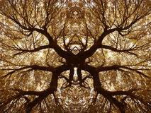 Δρύινοι κλάδοι και φύλλα ακροποταμιών στο θερμό τόνο Kaleidoscopic άποψη Στοκ Εικόνες