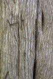 Δρύινος φλοιός Στοκ Φωτογραφίες