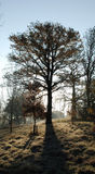 δρύινος χειμώνας δέντρων ξη& στοκ φωτογραφία με δικαίωμα ελεύθερης χρήσης