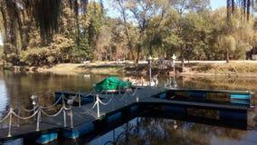Δρύινο άλσος zaporozhye Ουκρανία πάρκων, στοκ εικόνα με δικαίωμα ελεύθερης χρήσης