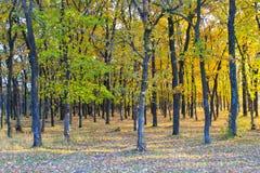 Δρύινο δάσος στο φθινόπωρο Στοκ Εικόνα