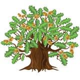 Δρύινο δέντρο με τα βελανίδια, διανυσματική απεικόνιση απεικόνιση αποθεμάτων