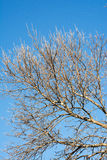 Δρύινο δέντρο με το μπλε ουρανό Στοκ εικόνες με δικαίωμα ελεύθερης χρήσης