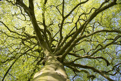 Δρύινο δέντρο που ανατρέχει από κάτω από στοκ φωτογραφίες με δικαίωμα ελεύθερης χρήσης