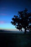 Δρύινο δέντρο, ρυάκι GA Στοκ Εικόνες
