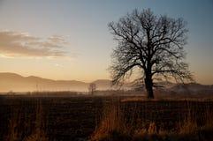 Δρύινο δέντρο σε ένα αγροτικό τοπίο το φθινόπωρο Στοκ Εικόνα